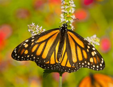 how to grow a butterfly garden planters place