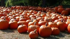 Fall, Pumpkin, Wallpapers