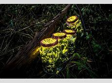 Chine Qui veut la peau des lucioles du Jiangxi