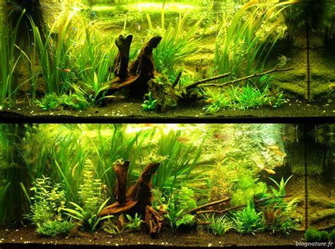 aquarium algues vertes sur le que faire contre les algues dans un aquarium