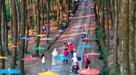 lokasi hutan pinus kragilan magelang top selfie pinusan