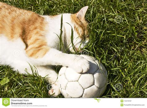 cat  soccer ball royalty  stock photography