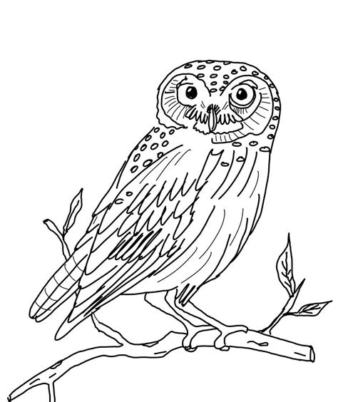 owls animal coloring pages pictures