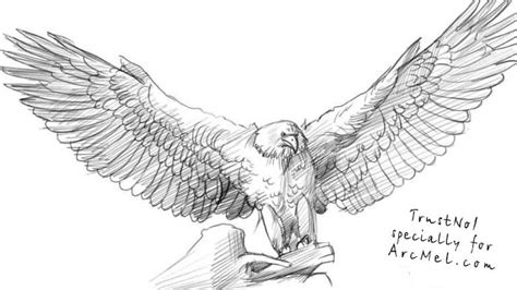 Kleurplaat Garuda by How To Draw An Eagle Step 4 How To