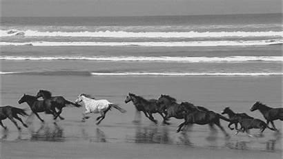 Horse Hippie Wild Freedom Cavalos Cowgirls Peace