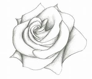 Photo Beautiful Flower Pencil Drawings Images Of Simple