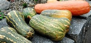 Varieties Of Pumpkins For Cooking by Pumpkin And Ghost Feast In Jiř 237 Ho Z Poděbrad Square