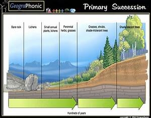 Game Statistics - Stages Of Primary Succession