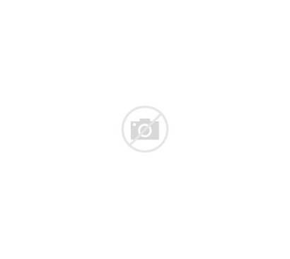 Animals Different Jungle Kinds Vector Six Illustration