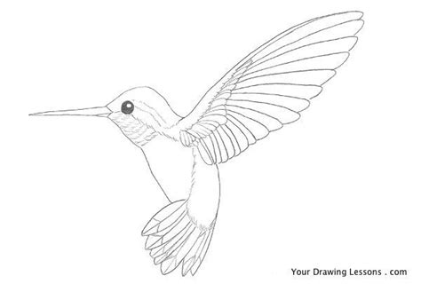 how to draw a hummingbird male models picture