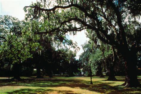 audubon park  orleans attraction