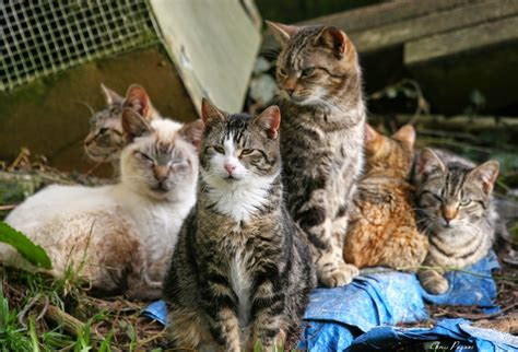 what of cat do i more feral cats and april wallpaper the feral life cat blog