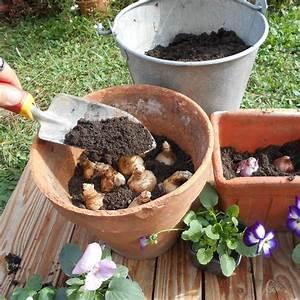 Planter Des Bulbes : vid o conseil planter des bulbes ~ Dallasstarsshop.com Idées de Décoration