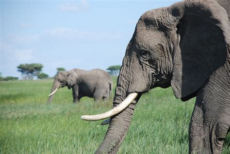 Animal Elephant Wallpaper Hd Wallpapers