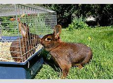 Kaninchen vergesellschaften So geht's