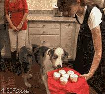awesom dog gifs  gifs