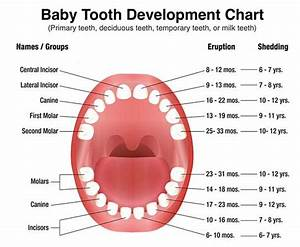 All About Primary Teeth