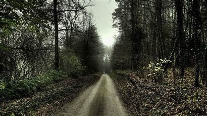 Spooky Forest Landscape Path Nature Trees Wallpapers