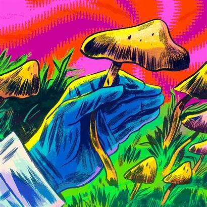 Mushrooms Magic Psychedelics Medicine Mushroom Psilocybin Illustration