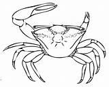 Fiddler Crab Coloring Designlooter sketch template