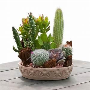 Medium Cactus Garden - Indoor & Office Plants - By Plant ...