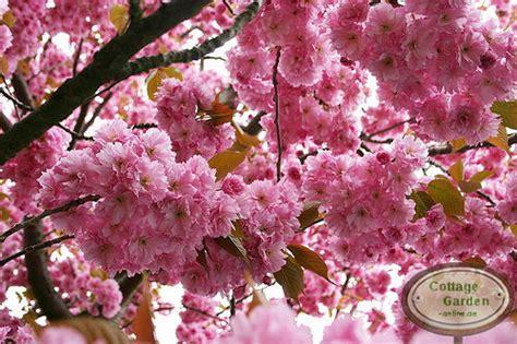 Japanischer Garten Zitat by Garten Welchen Baum Pflanzen