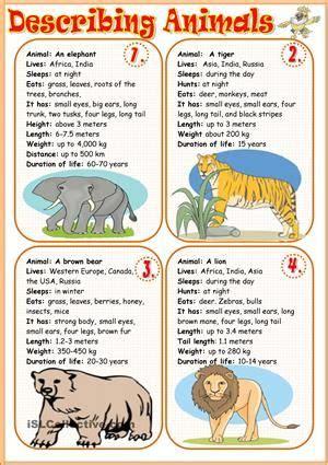 describing animals   images english activities