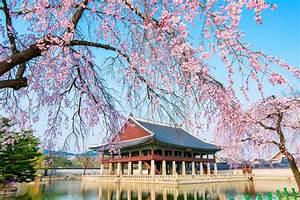 Top 10 Cherry Blossom Spots in Korea for Wedding ...