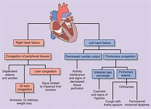 Chapter 20  Heart Failure And Circulatory Schock At San