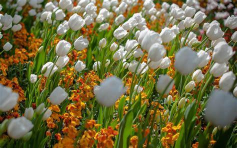 full size wallpaper  flower gallery