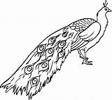Peacock Coloring Pages Printable Sheets Bestcoloringpagesforkids sketch template