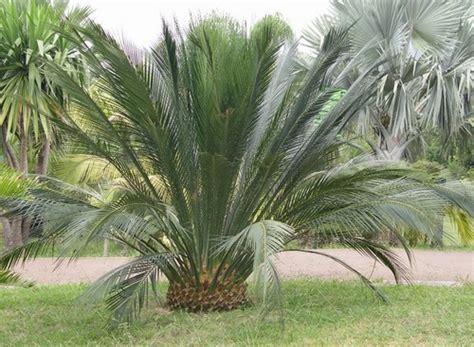 piante particolari da giardino piante da giardino resistenti al freddo con piante