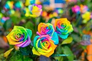 gousicteco: Most Beautiful Rose Gardens In The World Images