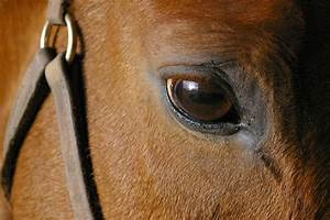 horses | The National Humane Education Society