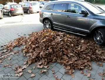 dog jumps  leaf pile  funny gifs updated daily