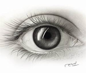 11 Organ Drawing Eye For Free Download On Ayoqq Cliparts