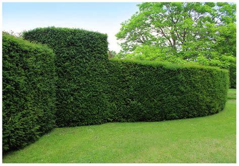 hedge  shrub trimming services  toronto tree