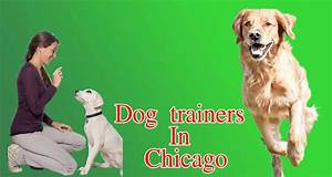 dog trainers in chicago location and phone number With dog training chicago