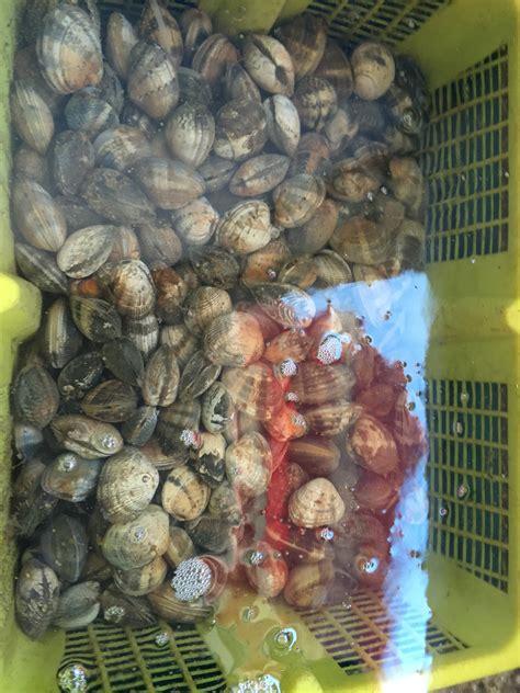 cuisiner les palourdes palourdes huitre allary