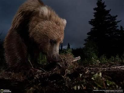National Geographic Contest Winners Ursus Horribilis Arctos