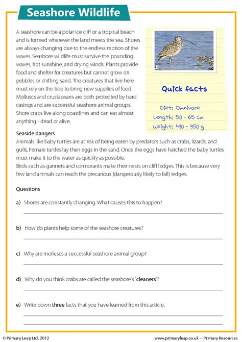 seashore wildlife reading comprehension