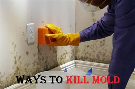 Kill Black Mold In Shower by How To Kill Mold
