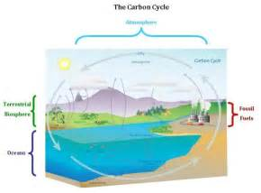 Two Main Carbon Sinks Are by Esrl Global Monitoring Division Global Greenhouse Gas