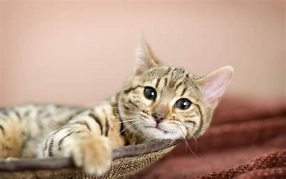 Kitty Cat Desktop