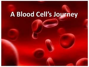 Blood Cells Journey
