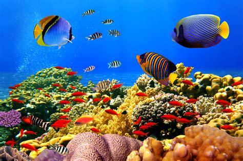 bureau marin fond d 39 écran tropical corail sous marine récif