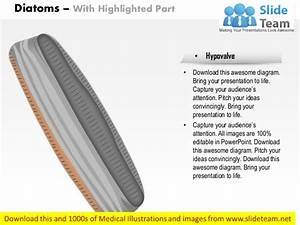 Diatoms Medical Images For Power Point