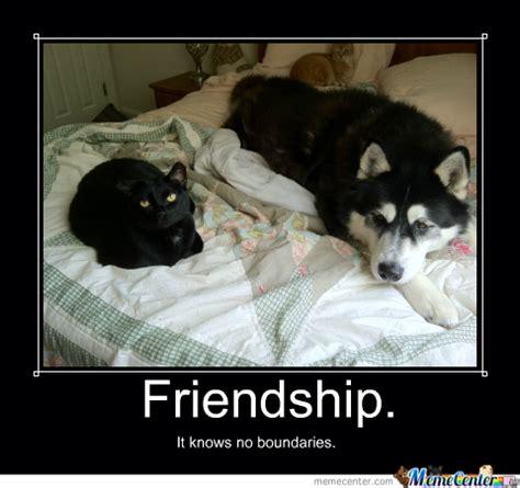 Friendship Meme - it s november i meme it rumpydog