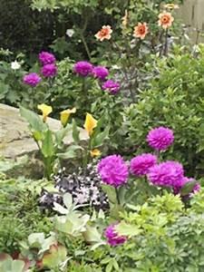 Bulbes D été : s lection de bulbes d 39 t et conseils de plantation ~ Melissatoandfro.com Idées de Décoration