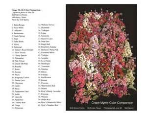 Crape Myrtle Tree Colors